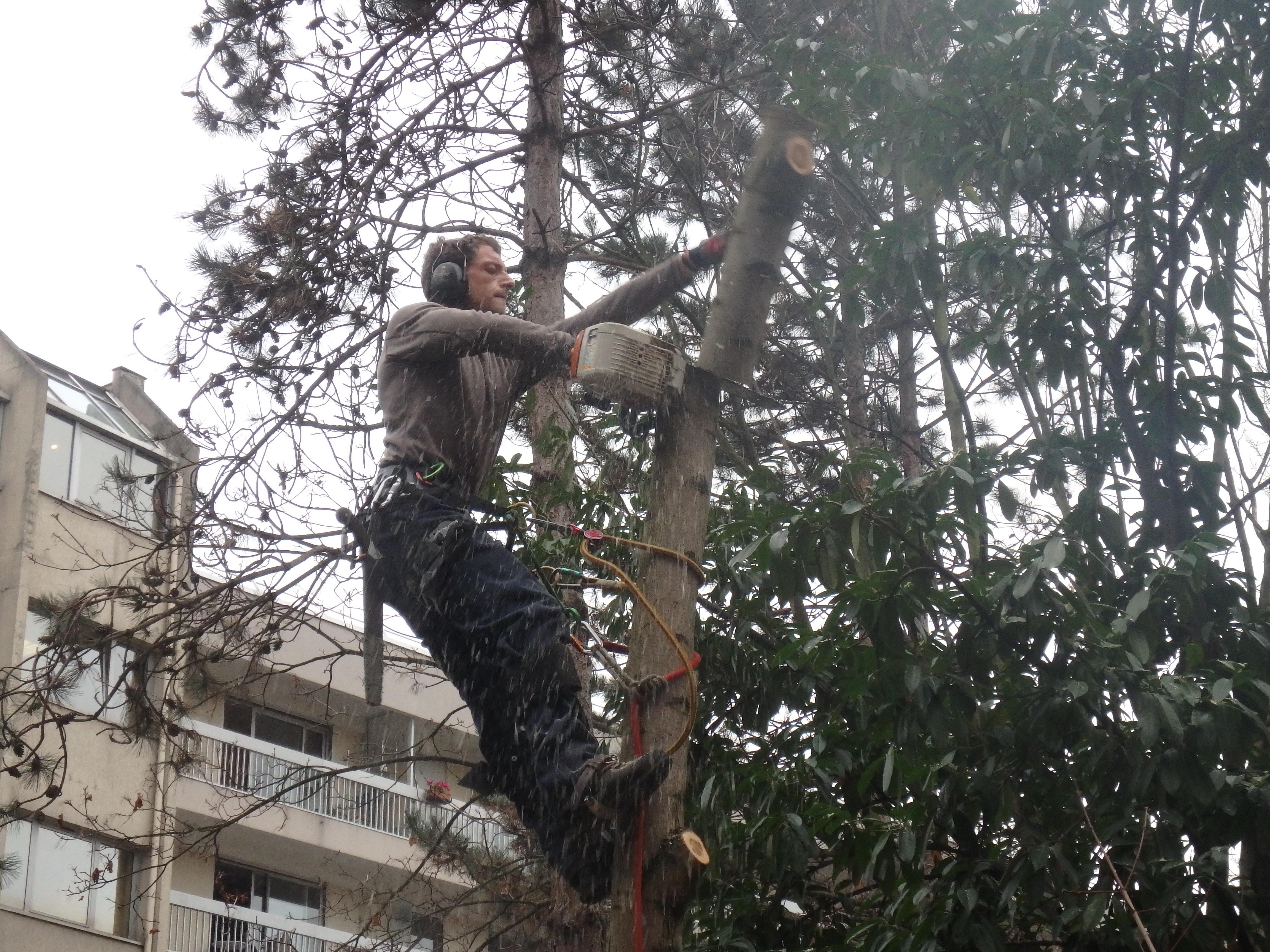 elagage arbre hauts de seine